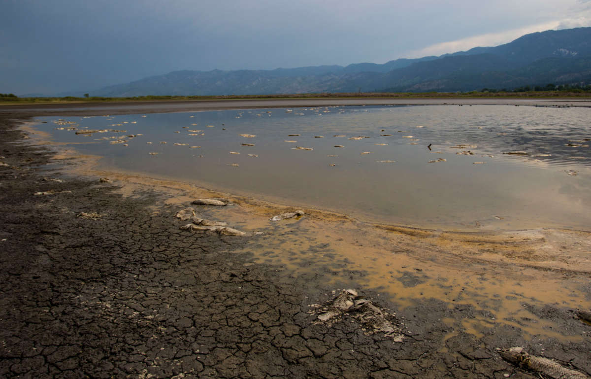 Dead carp rot in the remaining water of a drying Little Washoe Lake. As the drought continues on the west coast, lake levels drop and are no longer capable of sustaining fish.