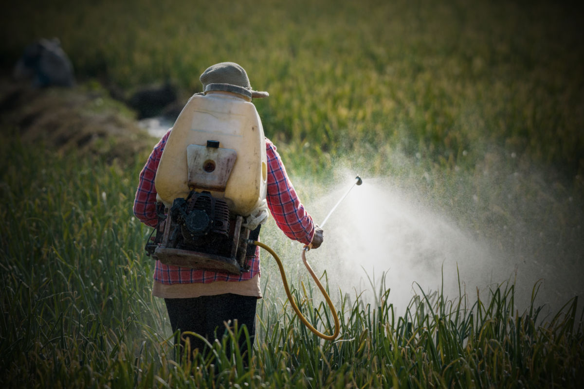 A worker sprays crops with pesticide