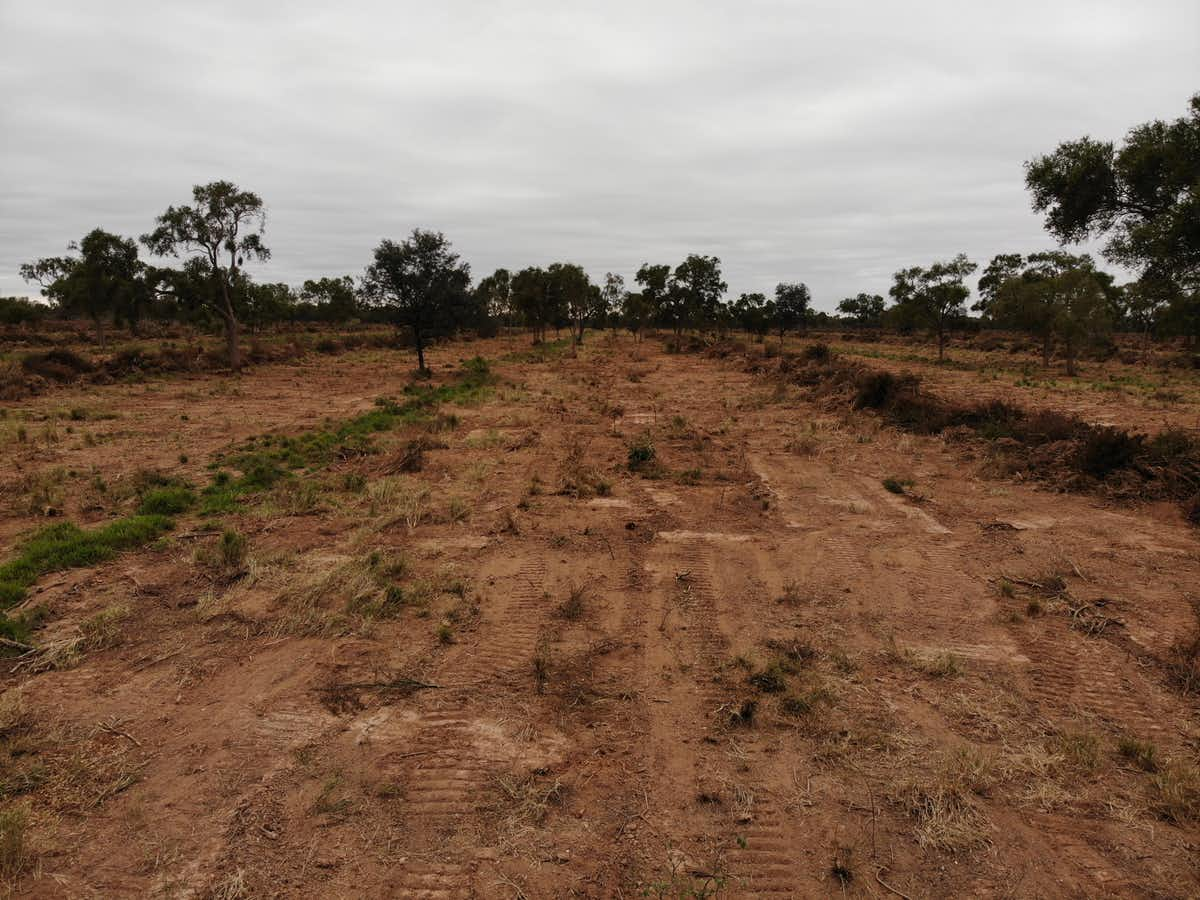 Freshly chained and scraped: Where a Paraguayan forest once stood, a cow pasture is in the making.