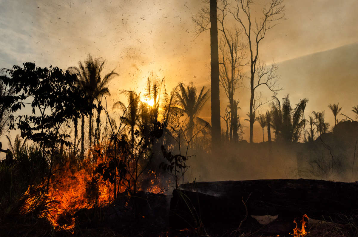 Rainforest trees burn against a yellow sky