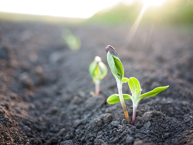 We must all become evangelists of Regeneration in order to survive. (Photo: Seedlings via Shutterstock)